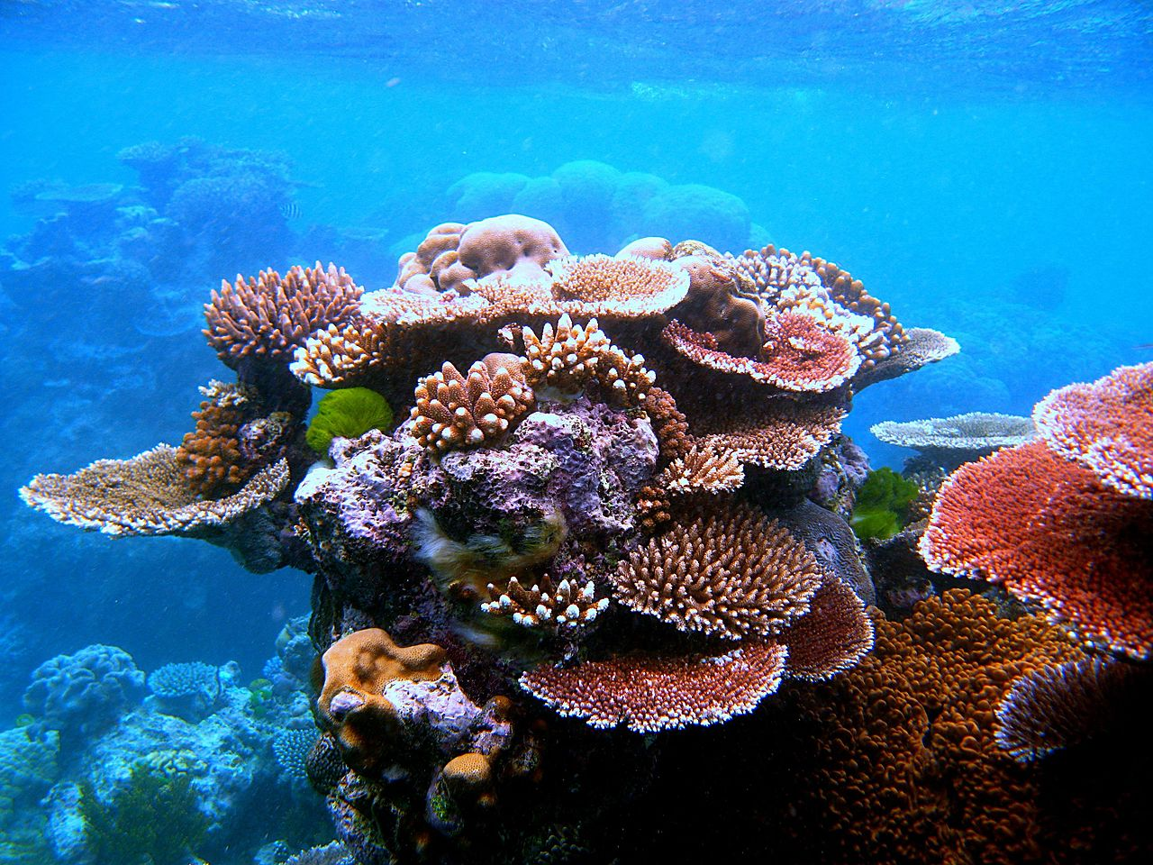 A variety of corals form an outcrop